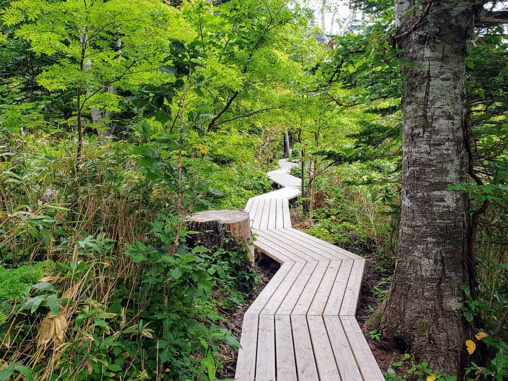 Winding pathway through Himenuma Pond Park on Rishiri Island, Hokkaido