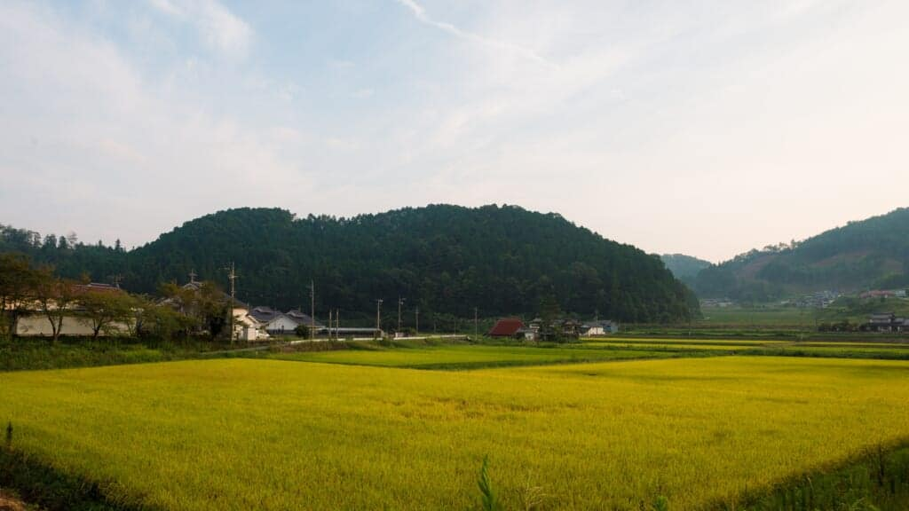Rice fields in the Japanese countryside