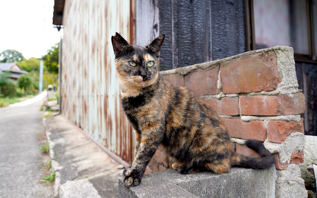 Cat sitting on bricks