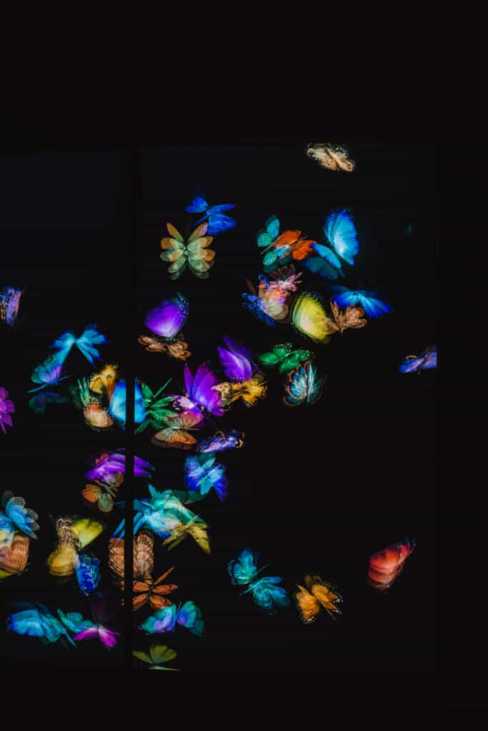 butterflies in teamlab borderless tokyo