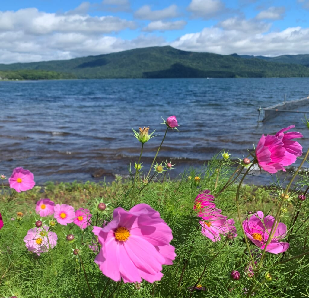 Flowers on the shores of Lake Akan