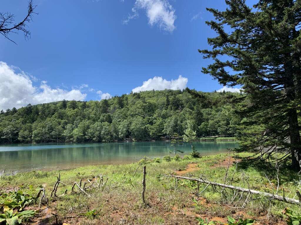 At the edge of the forest, on the banks of Lake Onnetō