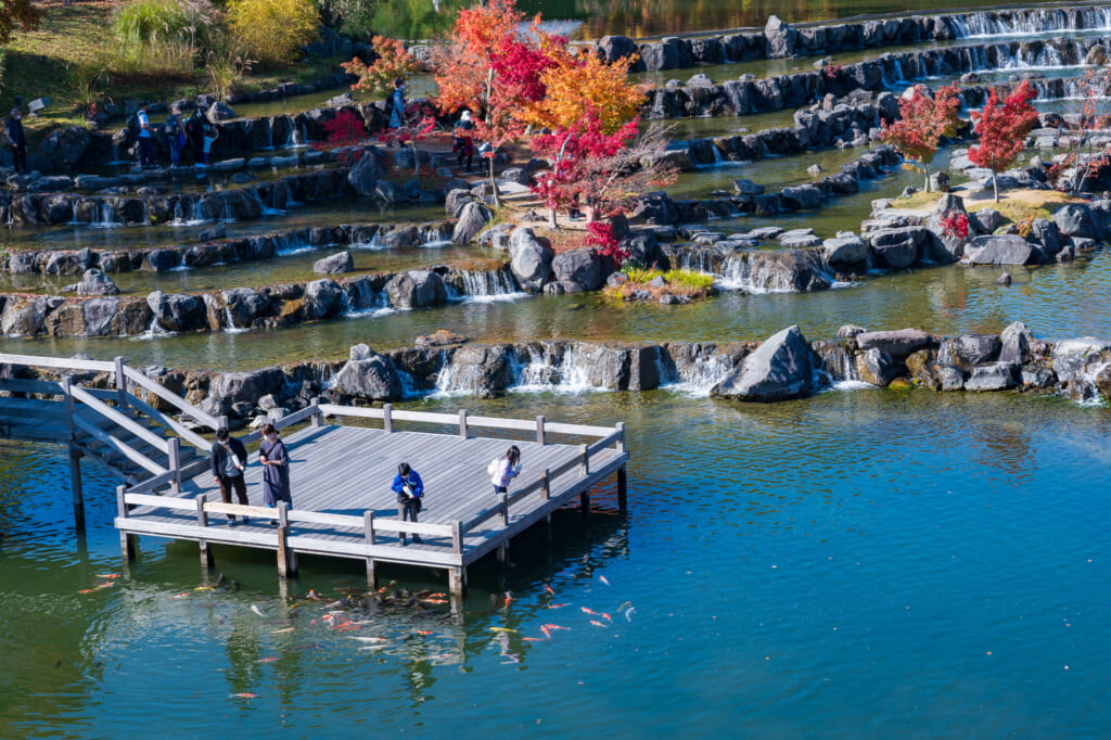 autumn leaves along pond in Japanese park  near Kyoto