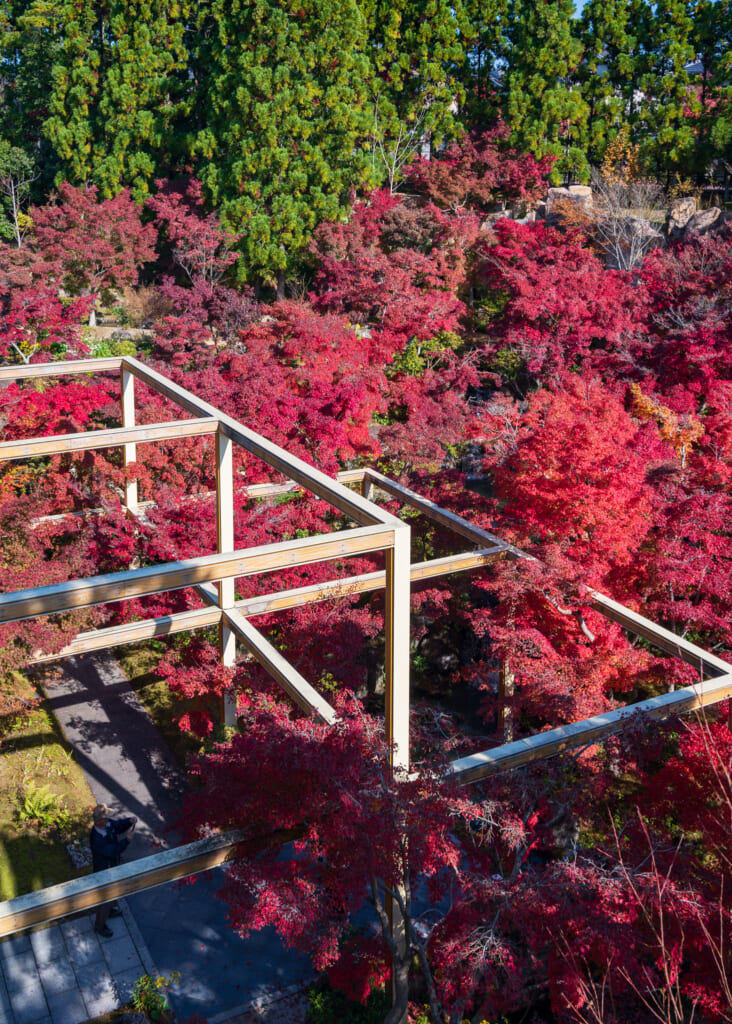 Red autumn foliage in japanese garden  near Kyoto