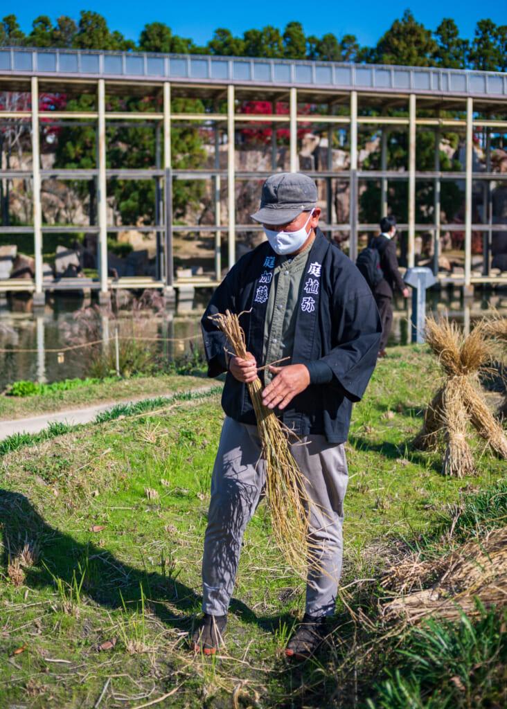 Japanese man collects rice stalks in garden