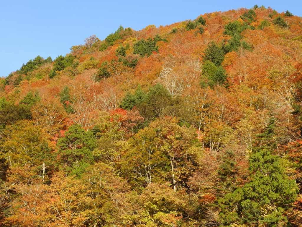 autumn colours in hinoemata area in japan