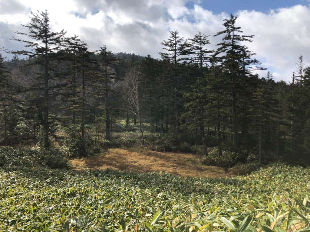 Views while Hiking through marshland at Oze National Park in Japan