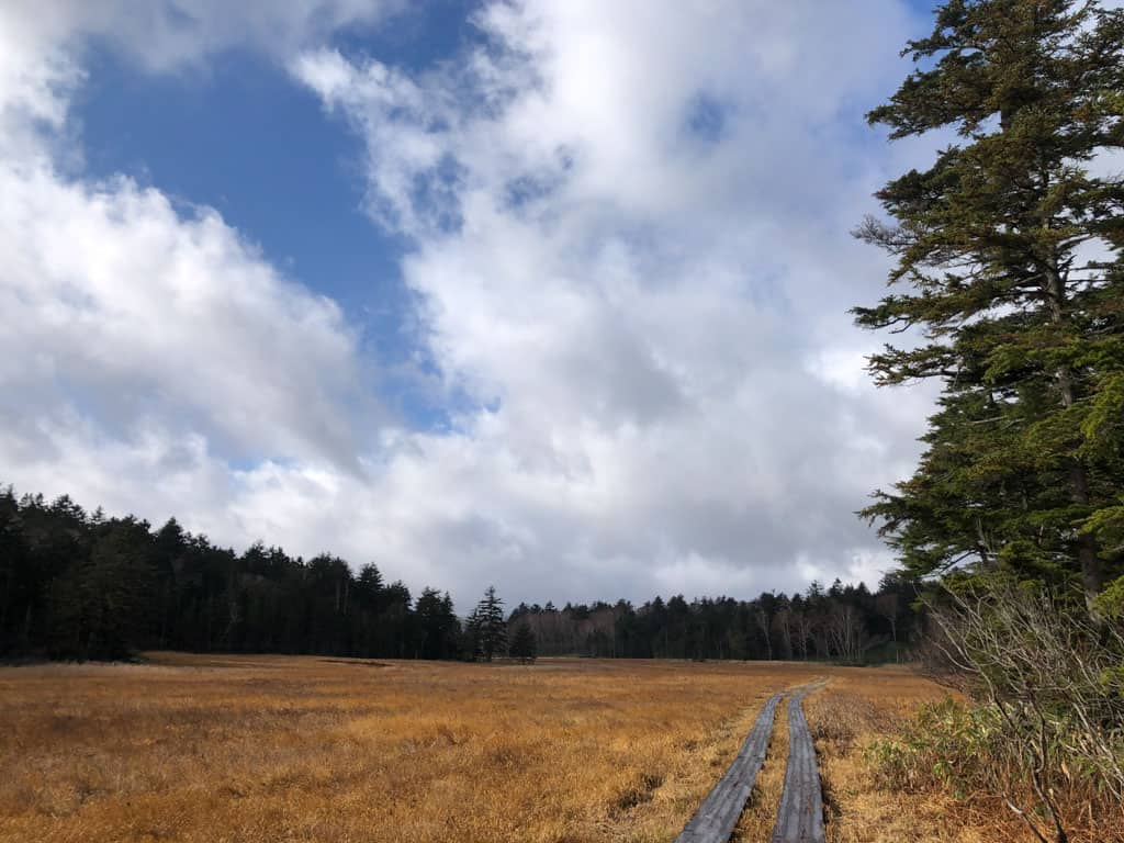 Open sky while Hiking through marshland at Oze National Park in Japan
