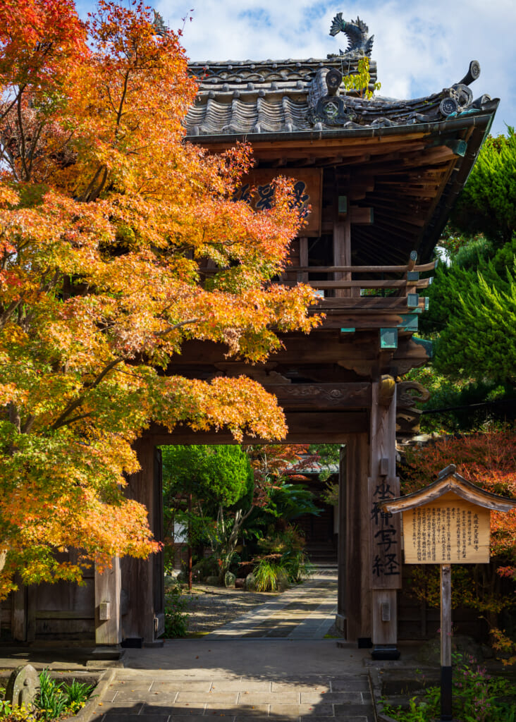 autumn leaves by traditional japanese gateway in Oita prefecture, Kyushu