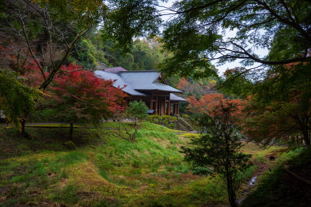 Autumn Leaves by traditional japanese building in Usuki city, oita, Kyushu