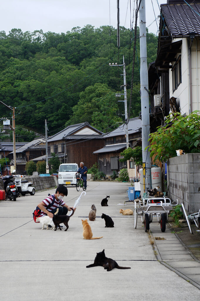 Stroking various cats on the street on Manabeshima, a cat island in Japan