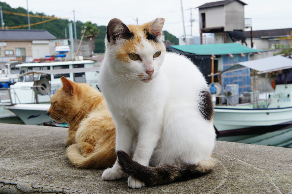 Cats on the wall in the port on Manabeshima, a cat island in Japan