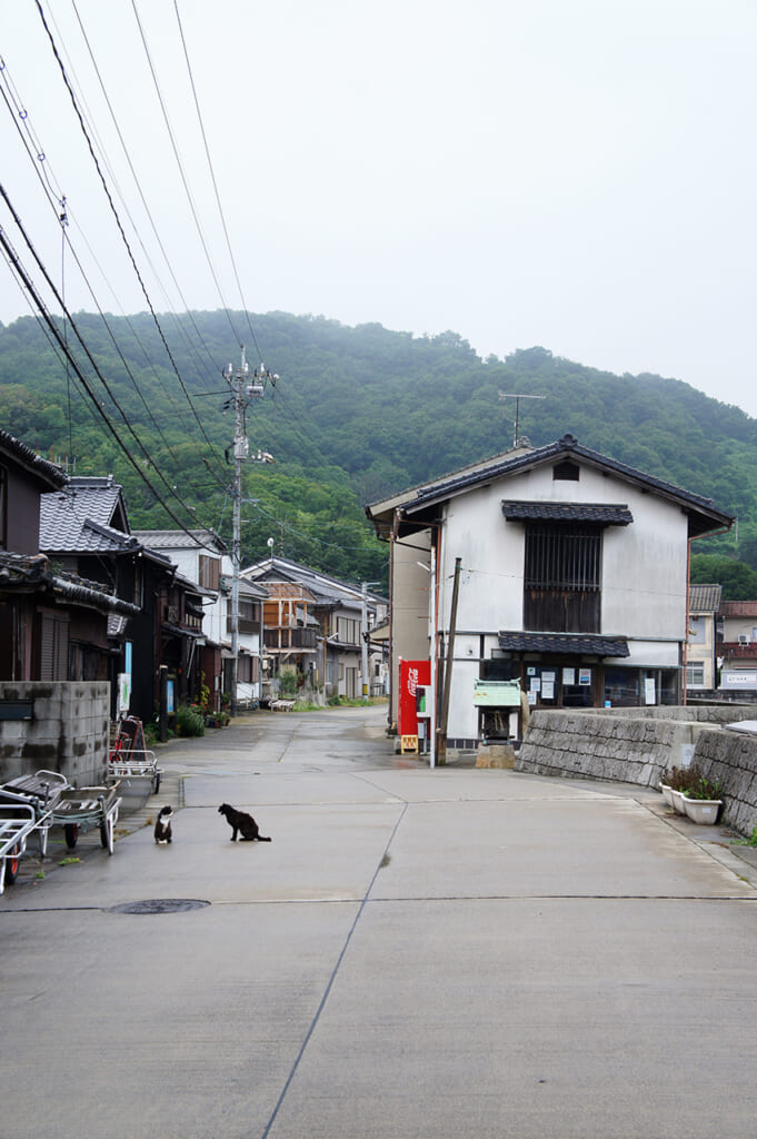 Two cats on a street on manabeshima, a cat island in Japan