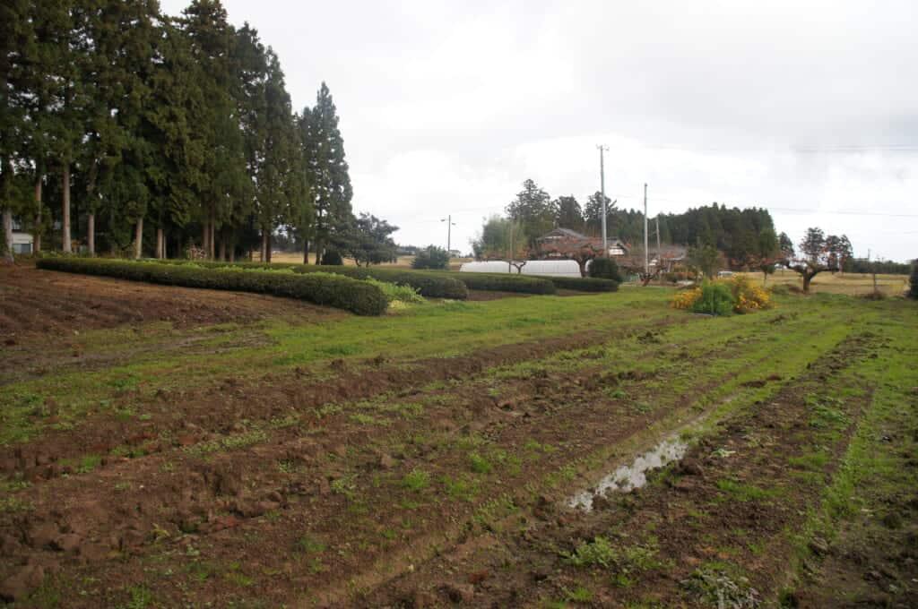 Sado Island tea fields and farmland