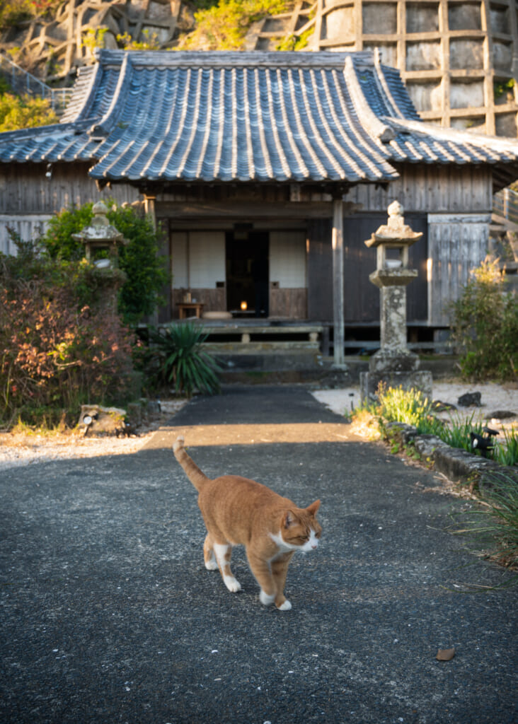 cat in front of japanese temple on goto island
