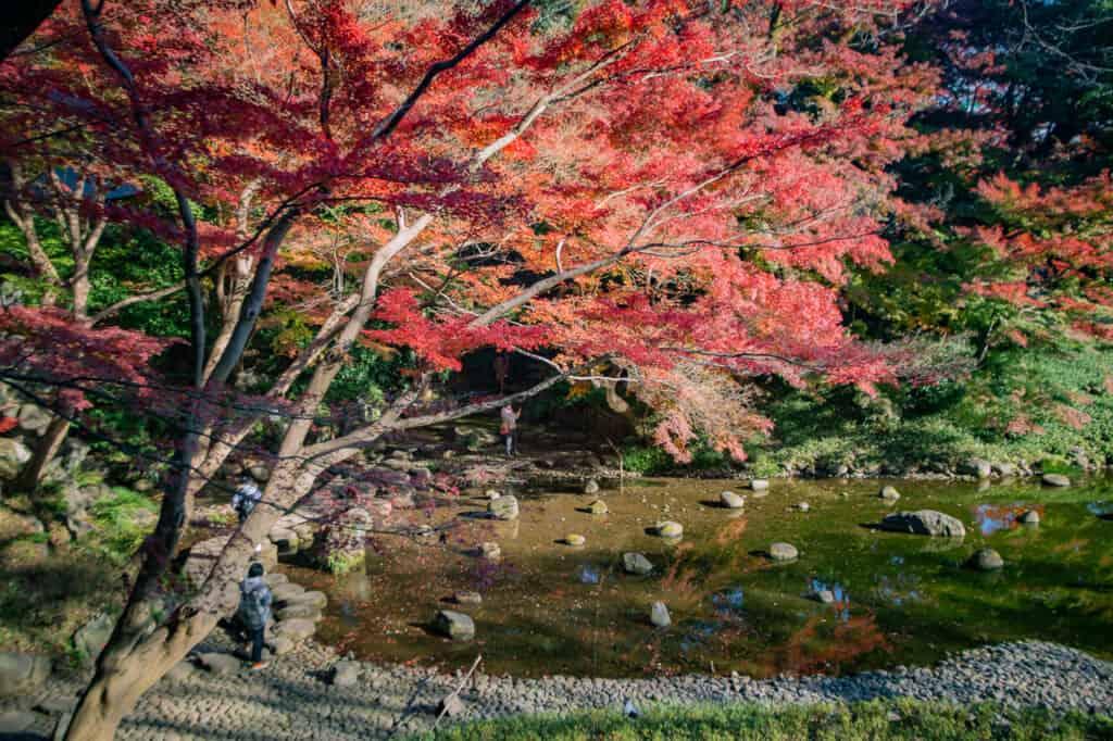 Koshikawa korakuen Japanese gardens with autumn colors