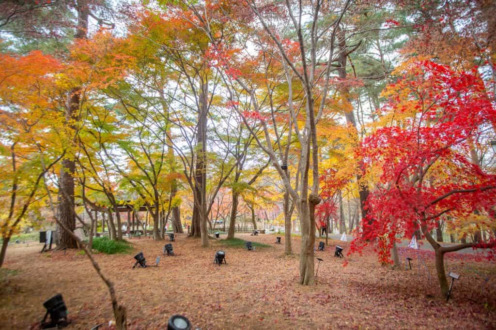 Autumn in Shinri Koen