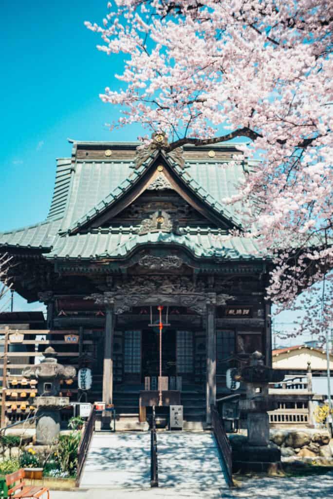 temple in sakura season