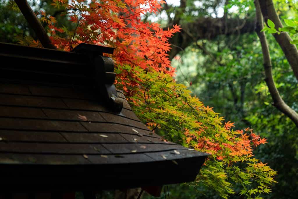 The grounds of Usa Jingu Shrine in late Autumn