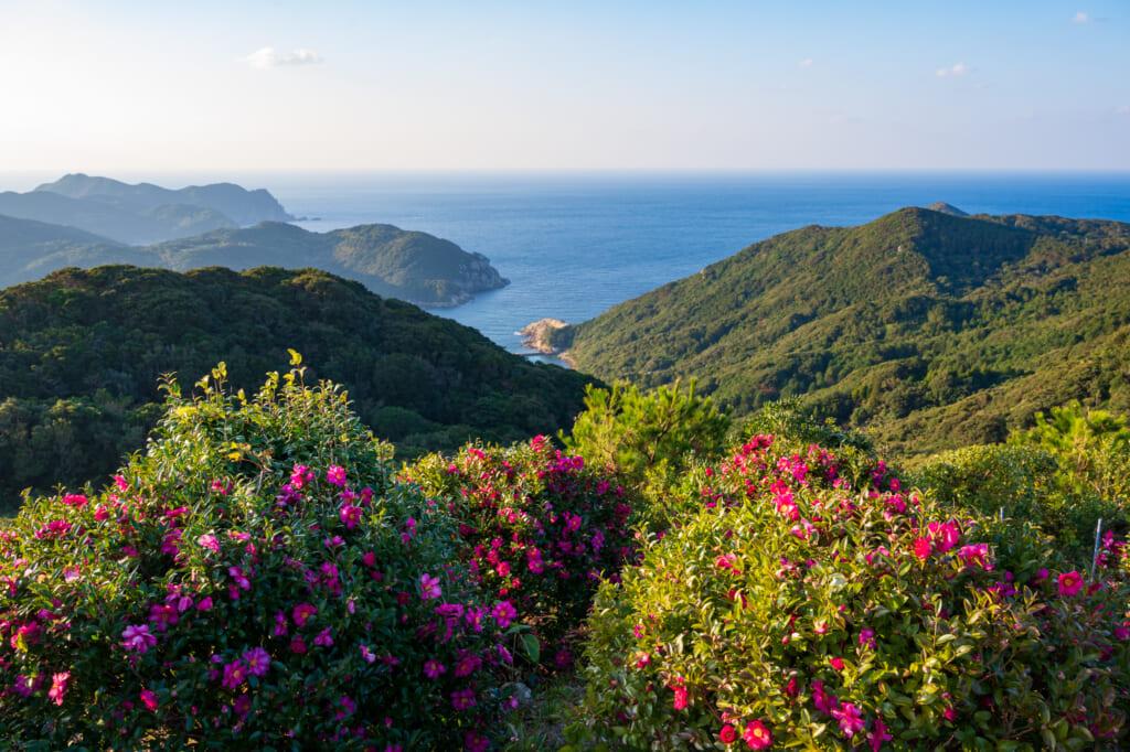 Early season tsubaki (camellia) bloom on Hisaka Island in the Goto Islands