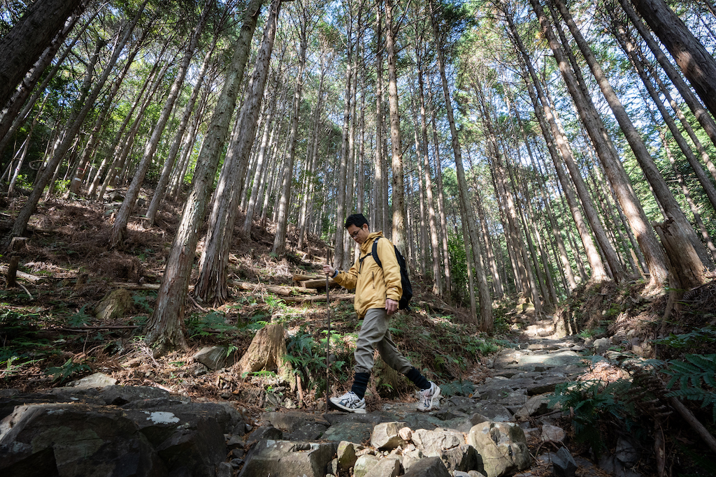 Walking down a stone path in the forest of Kumano Kodo