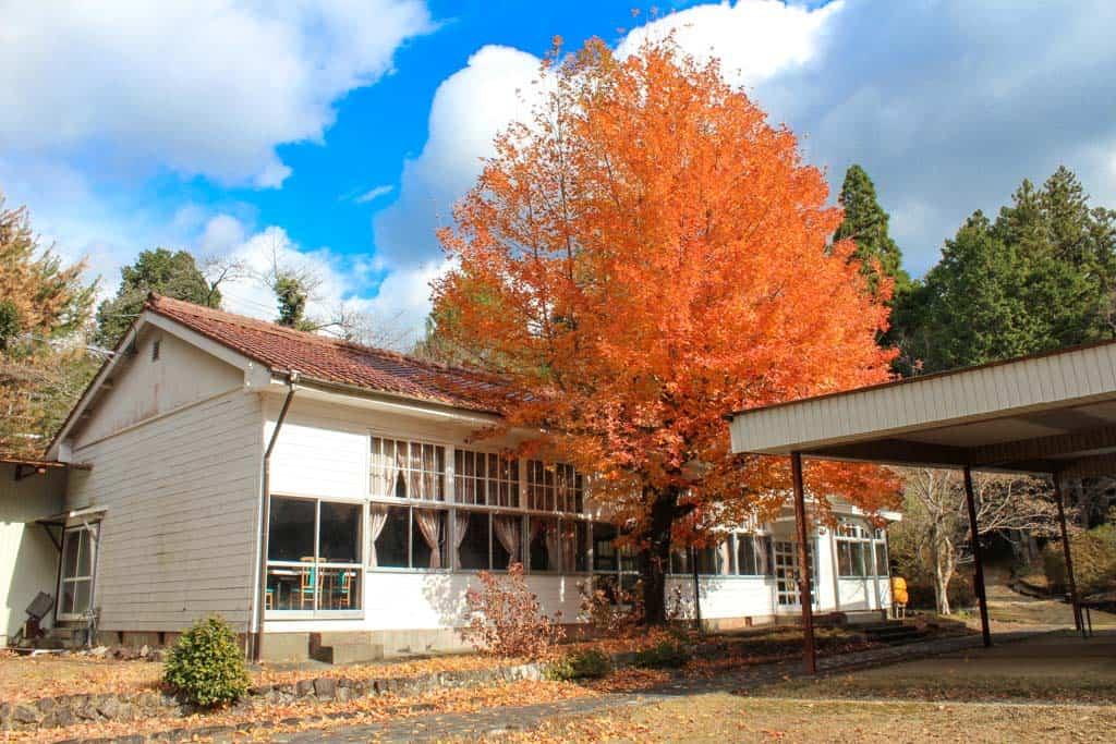 autumn leaves and japanese abandoned school along the kumano kodo