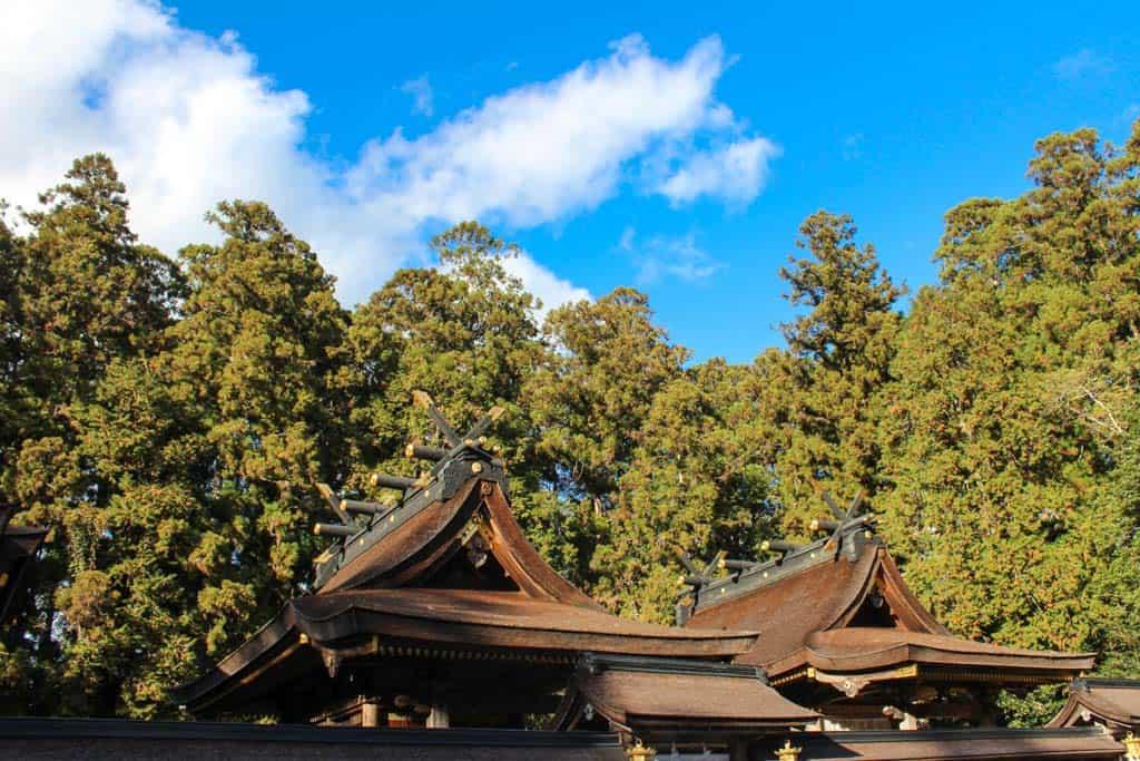 hongu taisha shrine roofline within japanese forest
