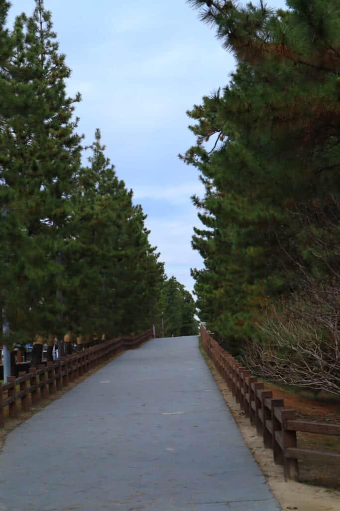 The Soka Matsubara promenade in Saitama