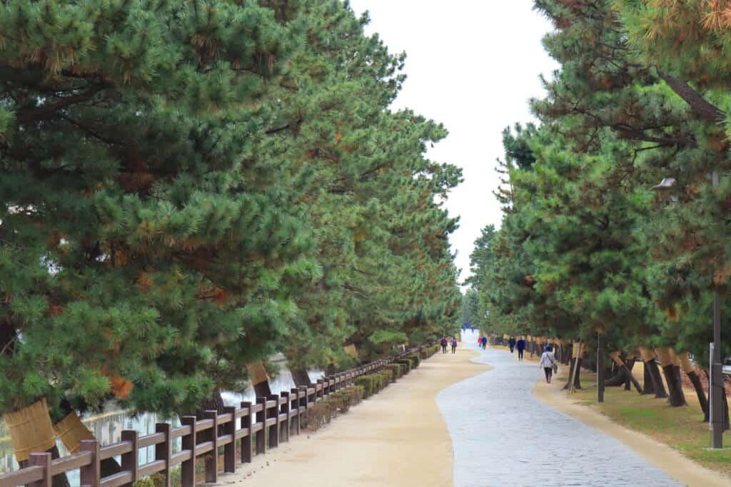 The Soka Matsubara promenade is a pedestrian road linked with pine trees