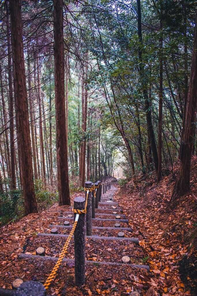 Forest steps in Osaka, Japan