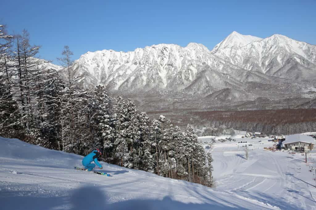 trees covered with snow at Togakushi ski resort in Nagano