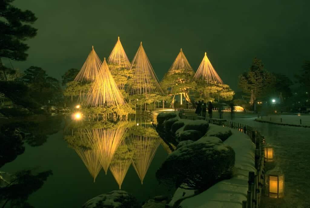 illuminated tree supports at night