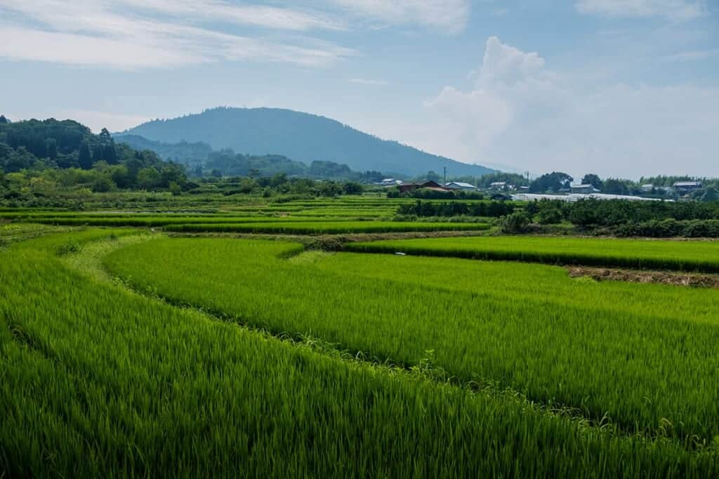 Japanese rural landscape of green rice paddies and mountain in the background