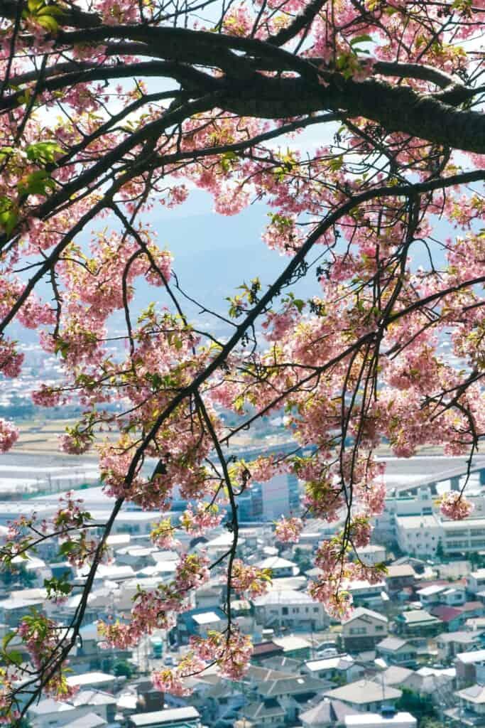 Sakura and Matsuda City
