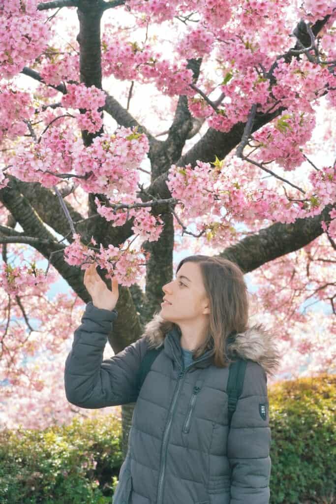 Staring the marvelous sakura at Matsuda Cherry Blossom Festival