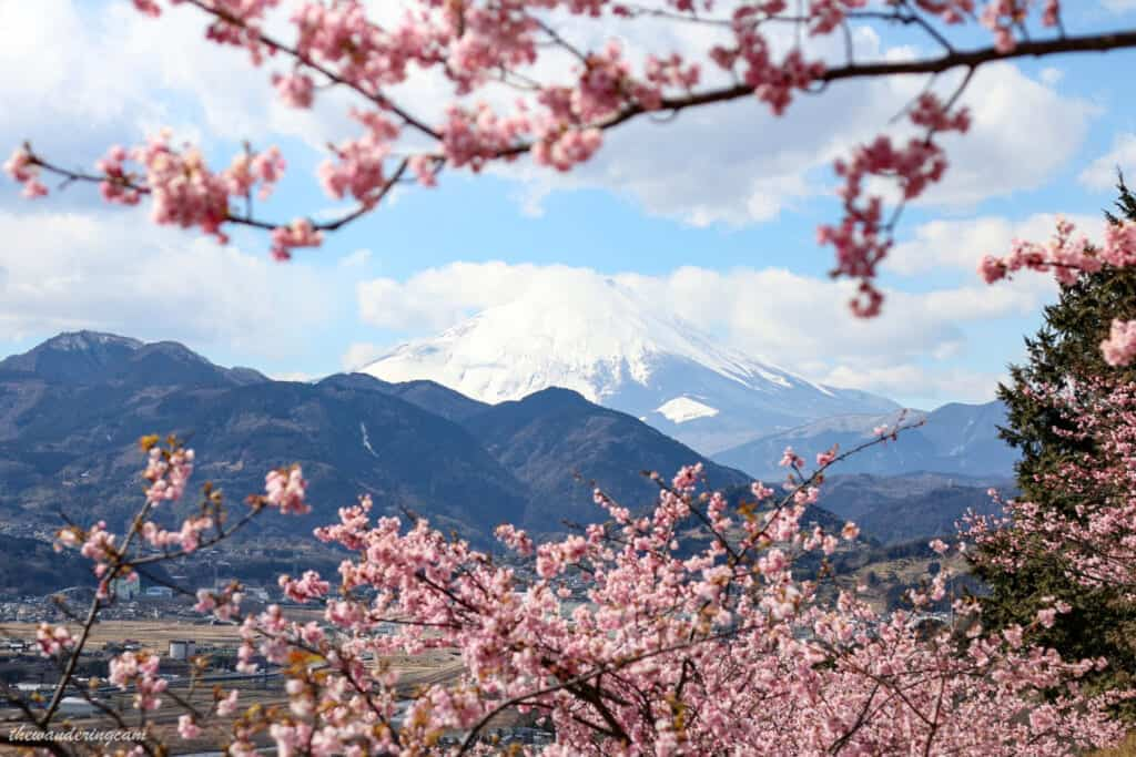 From the Matsuda Cherry Blossom Festival you can see Mount Fuji on a sunny day