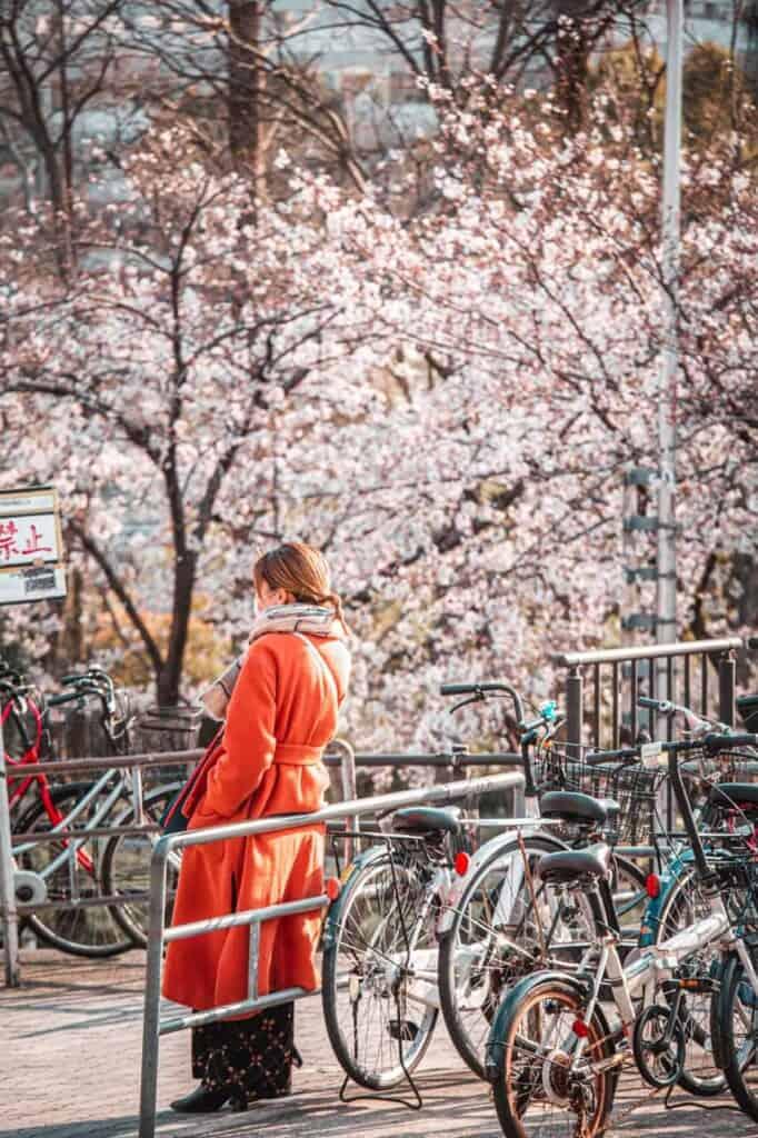 a girl waiting in front of some wonderful sakura flowers in Osaka