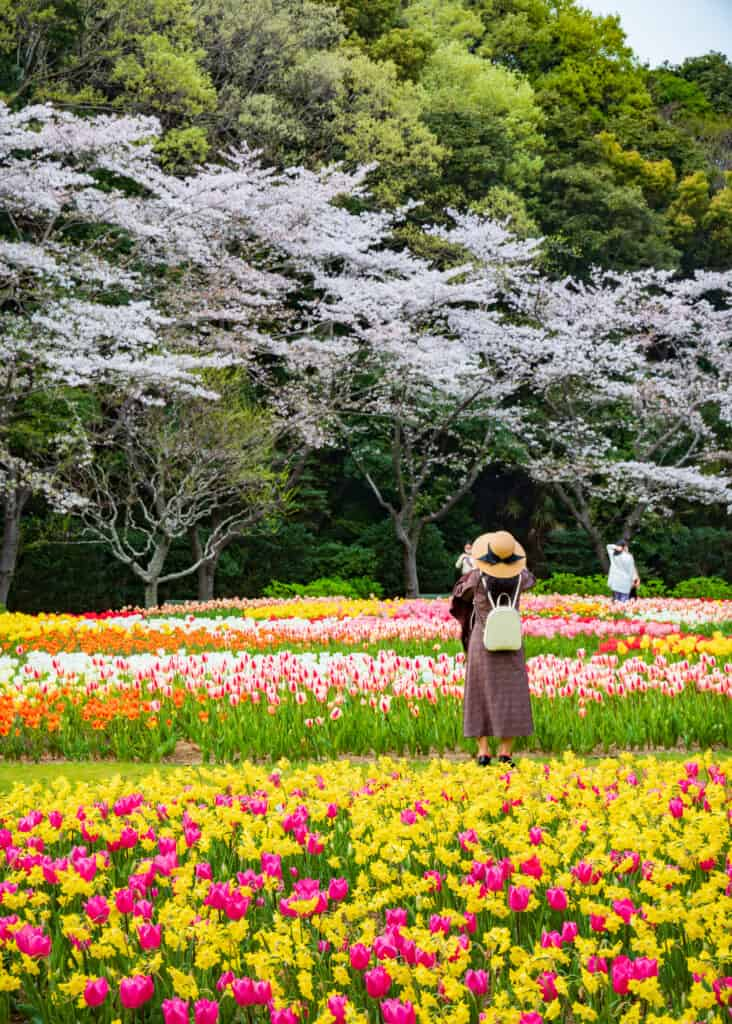 japanese woman take photos of flowers and cherry blossoms