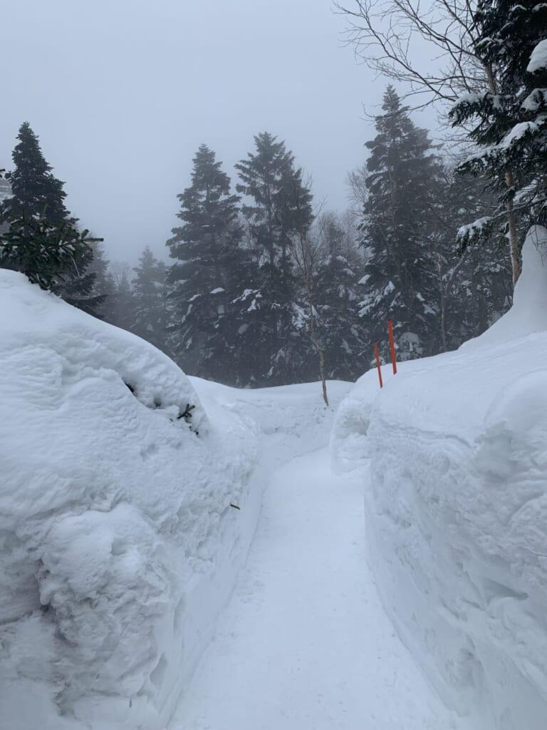 snowy path through a forest