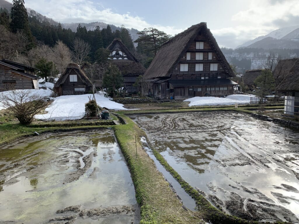 Traditional Japanese thatched houses behind empty rice fields in winter in Gifu, Japan