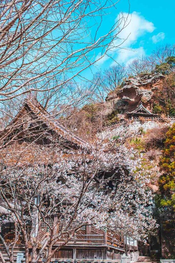 Japanese shrine with sakura cherry blossoms through the trees in Japan