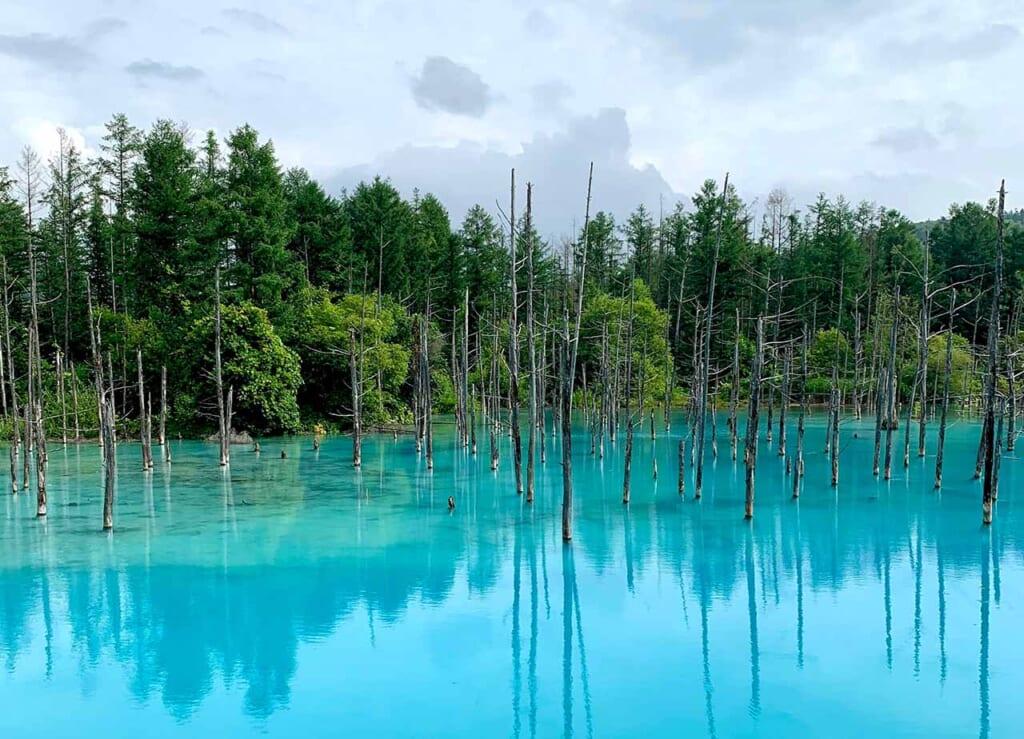 Blue Pond in Biei, Hokkaido