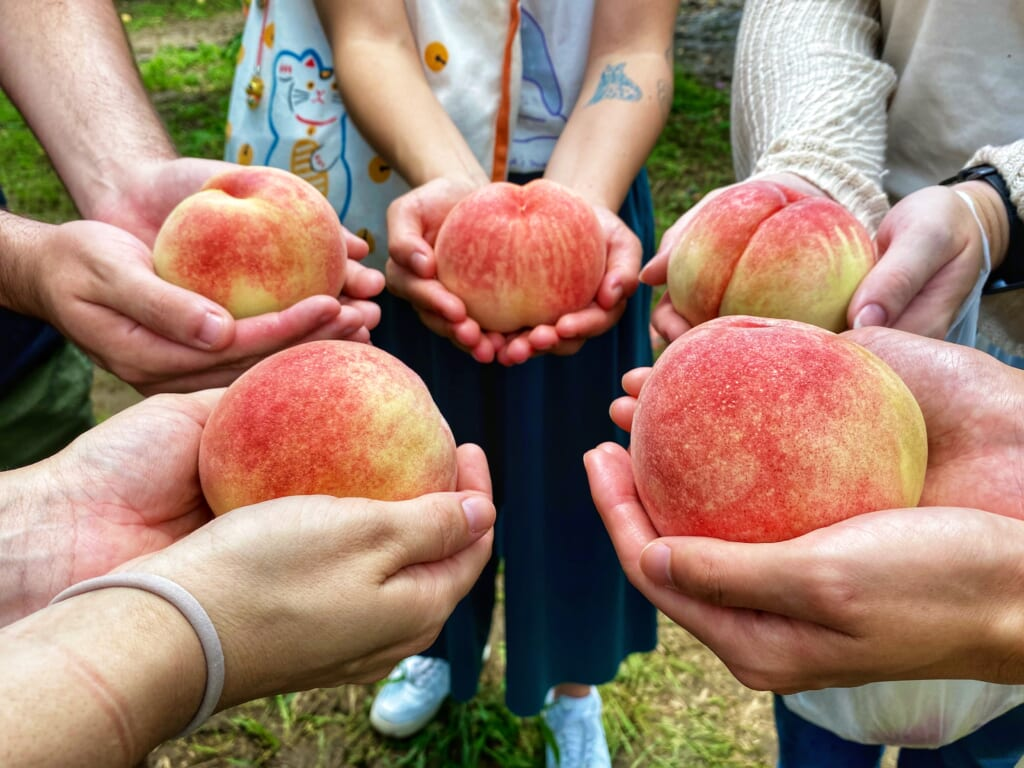 Peach picking, a great activity to share with friends