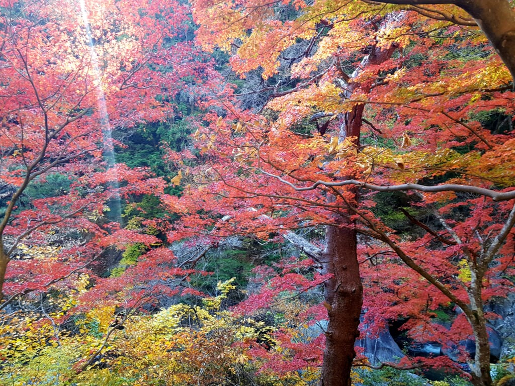 Shosenkyo Gorge and its wonderful fall leaves during autumn in Japan