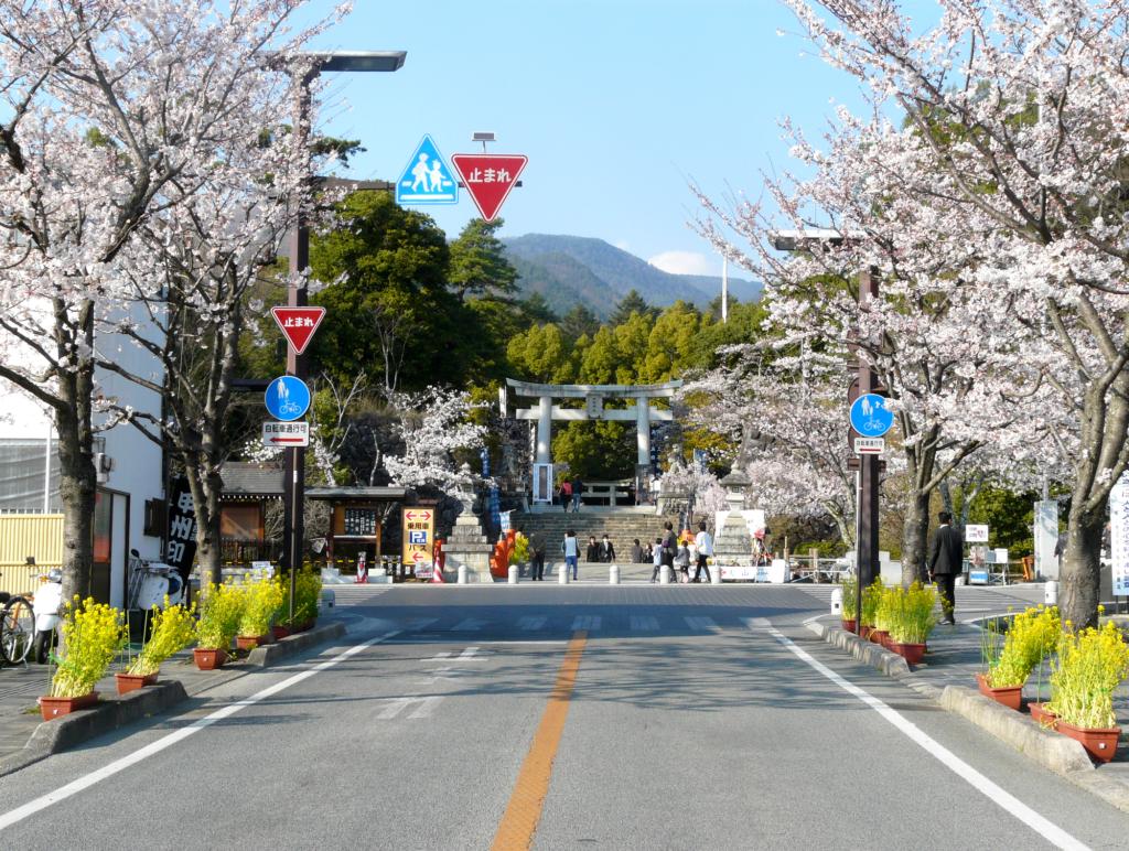 Takeda shrine with lovely sakura  cherry blossoms during spring in Japan