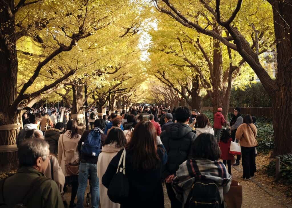 Japanese people admiring autumn gingko leaves