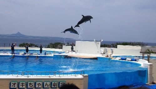 Le bassin des dauphins de l'aquarium Churaumi situé à Okinawa, sur l'île de Naha.