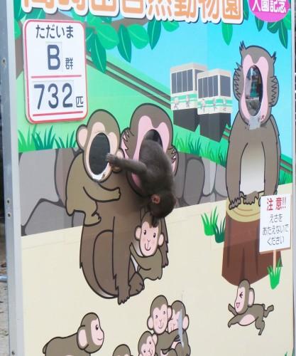 Singe joueur au parc aux singes de Takasakiyama, entre Beppu et Oita sur l'île de Kyushu