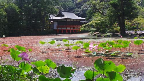 Bâtiment sur pilotis au milieu d'un étang de nénuphars au sanctuaire Usa Jingū sur l'île de Kyushu
