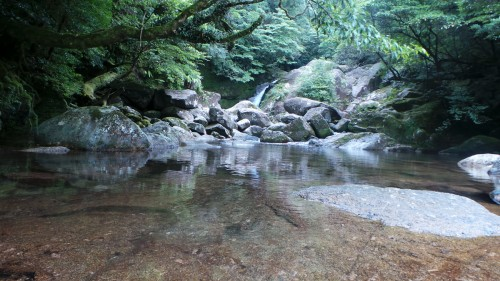 La nature dense et intacte de Yakushima